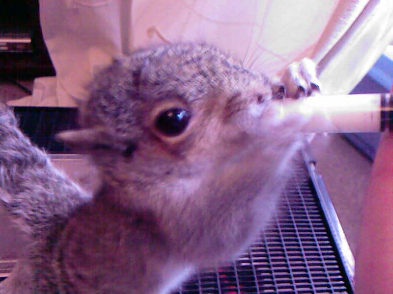 Squirrel kit