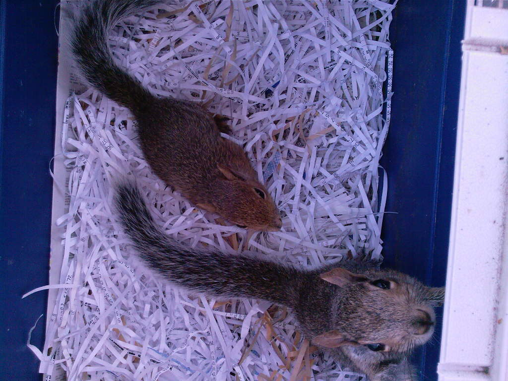 The squirrels (terrible two-some)
